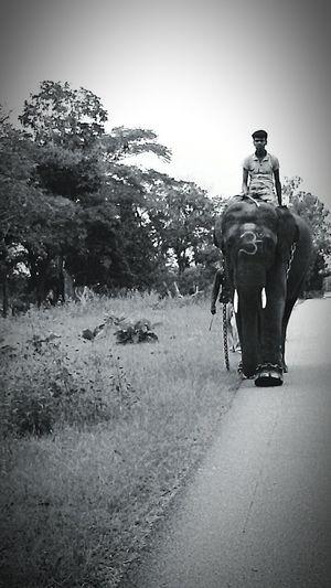 Elephants Naturelovers Jungle Trekking Elephant Trekking Annamalai Jungle Shoot AnimalCruelty Animalrights