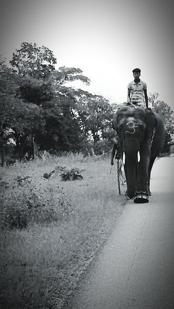 Elephants Naturelovers Jungle Trekking Elephant Trekking Annamalai Jungle Shoot AnimalCruelty Animalrights