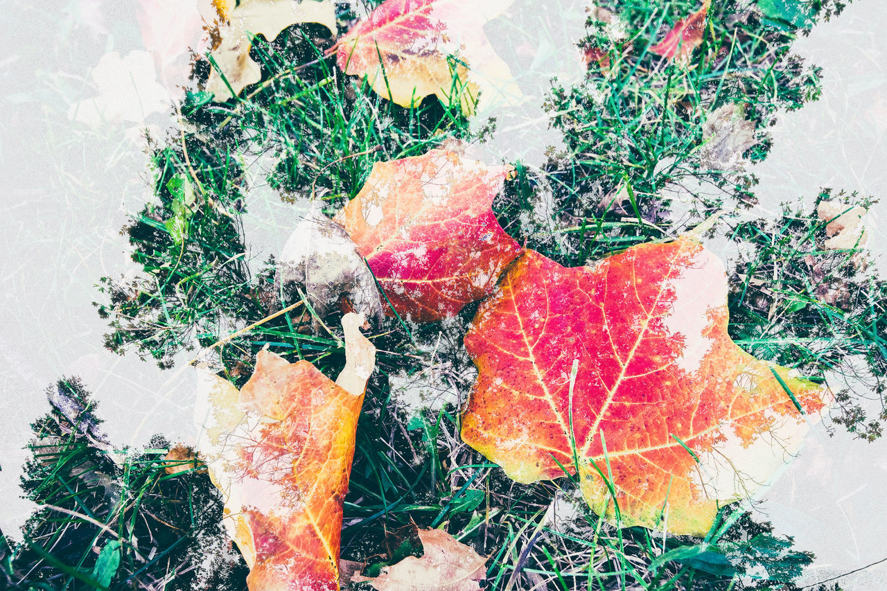 leaf, change, autumn, nature, high angle view, outdoors, day, plant, no people, growth, fragility, grass, close-up, beauty in nature