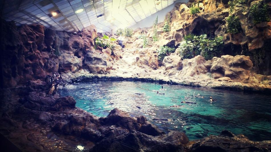 Loro Park Penguins Beautiful View SPAIN