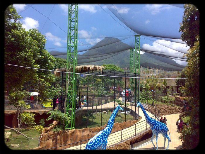 Taking Photos Zoo Nokia N73