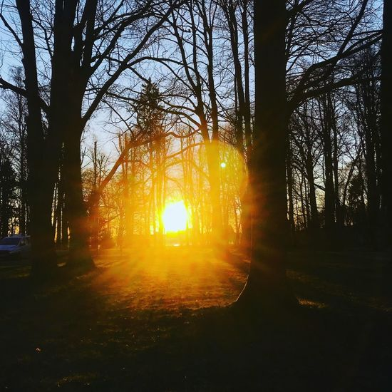 Tree Sunset Plant Sunlight Sun Sky Nature Beauty In Nature Tranquility Silhouette Orange Color Sunbeam No People Tree Trunk Scenics - Nature Lens Flare Trunk Land Branch Tranquil Scene