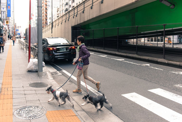 Morning walk with Pets in Japan Adult Adults Only Animal Animal Themes Baby Stroller Day Dog Domestic Animals Full Length Mammal One Animal One Person One Woman Only One Young Woman Only Only Women Outdoors People Pet Leash Pet Owner Pets Real People Street Transportation