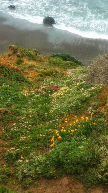 Cliffs edge- Wildflowers drop off lands edge. Meditation Background Golden Copy Space Yellow Zen Aerial High Angle View Lands Edge Cliff Foreground Focus Countryside Romantic Peaceful Tranquility Water Wave Sea Beach Sand High Angle View Grass Surf Shore Foreground Blooming Growing Coast Calm Ocean