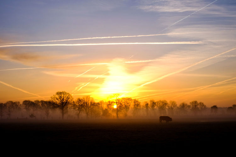 Countryside winter sunrise landscape Bare Tree Beauty In Nature Cloud - Sky Environment Field Fog Idyllic Land Landscape Nature No People Non-urban Scene Orange Color Outdoors Plant Scenics - Nature Silhouette Sky Sunset Tranquil Scene Tranquility Tree Vapor Trail