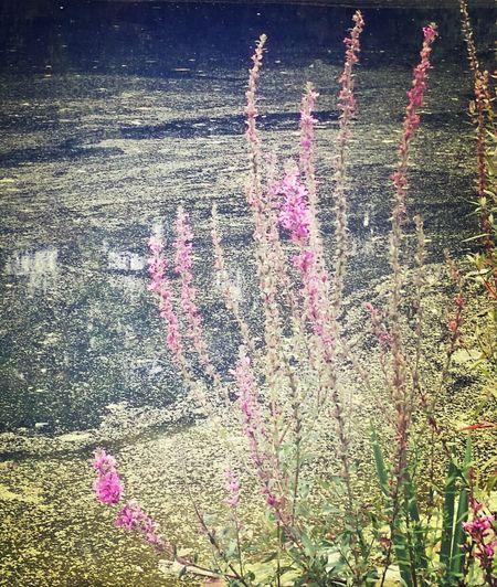 Flowers By The Lake Kew Gardens EyeEm Flower EyeEm Nature Lover