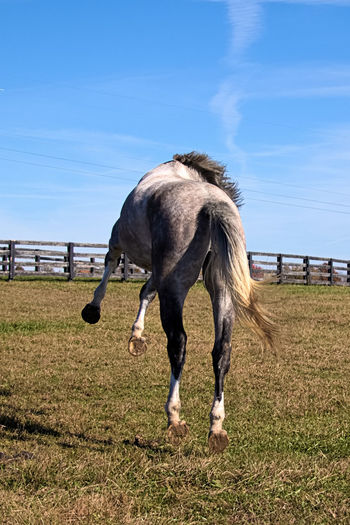 """""""Happy!"""" by @olavcresp Happiness Animal Themes Domestic Animals Field Horse Mammal Nature No People One Animal Outdoors Paddock Rural Scene"""