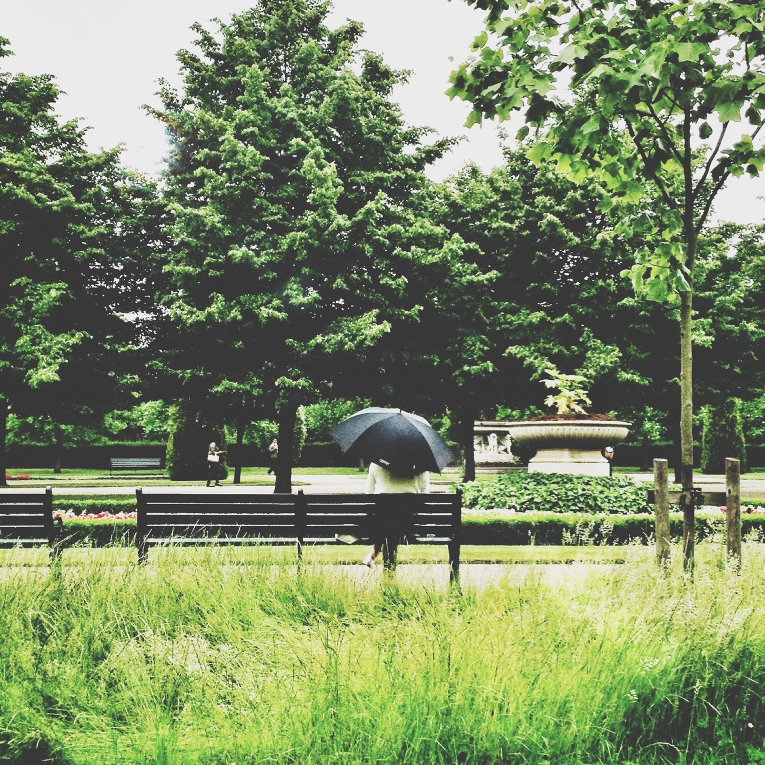 tree, grass, green color, growth, full length, rear view, park - man made space, bench, sitting, nature, plant, men, field, day, relaxation, lifestyles, person, leisure activity
