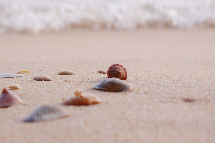 shells and sands on beach Life Is A Beach Snail Absence Beach Beauty In Nature Brown Close-up Copy Space Day Food Food And Drink Fruit Land Nature No People Outdoors Sand Selective Focus Shell Shells Shells On The Beach Surface Level Tranquility