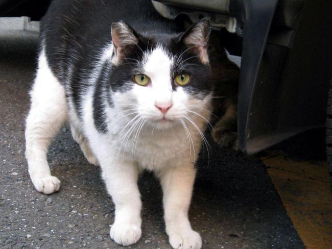 Stray Cat Cat Animals