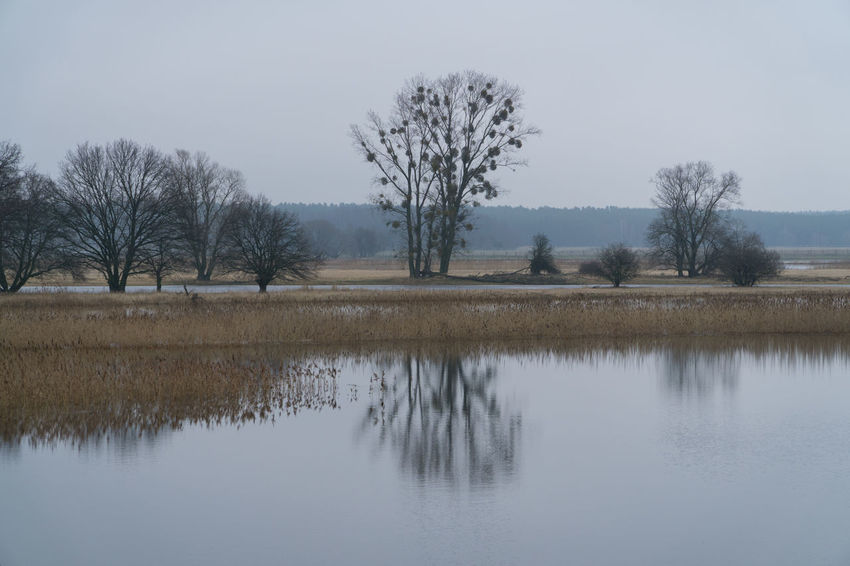 Landsscape photography in the area of Oderbruch in Germany. Grass Ice Reflection Tree Trees Bare Tree Beauty In Nature Branch Clear Sky Cold Temperature Day Group Of Trees Landscape Nature No People Outdoors Reflection Scenics Sky Tranquil Scene Tranquility Tree Water Waterfront