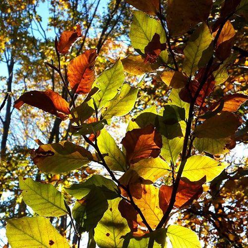 Bursa Uludag Millipark Sonbahar Sarıyapraklar Kırmızıyapraklar Yaprakdokumu