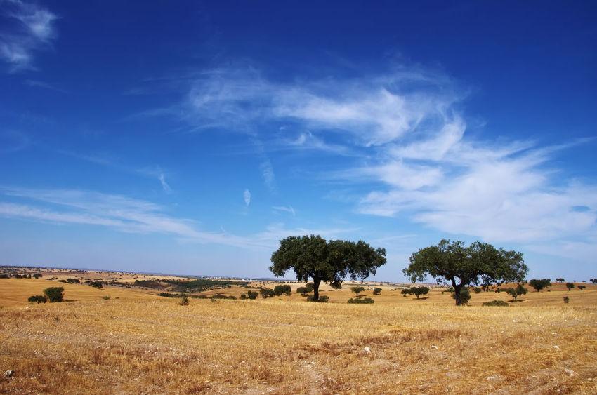 Alentejo Alentejo Landscapes Blue Cloud - Sky Field Grass Landscape Nature Scenics Sky South Of Portugal Tranquil Scene Tree