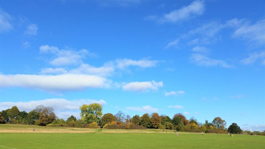 Hampstead Heath London Beauty In Nature Beauty In Nature Blue Clear Day Cloud - Sky Day Field Grass Green Color Idyllic Landscape Nature No People Outdoors Plant Sky Tranquil Scene Tranquility Tree Walking