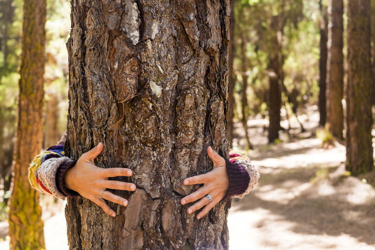 Woman hugging tree trunk in forest