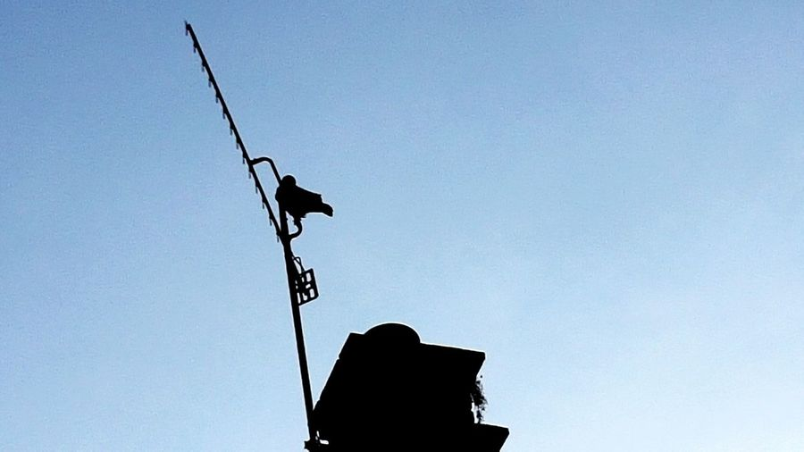 Low Angle View Outdoors No People Sky Day Chimney Bird Crow Ariel Antenna Looking Up