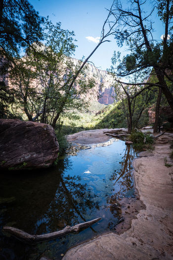 Zion National Park National Park Nature Rock Rock Formation Utah Zion National Park Beauty In Nature Branch Cherry Blossom Day Environment Forest Growth Lake Land Nature Nature_collection No People Outdoors Plant Reflection Rock - Object Scenics - Nature Sky Tranquil Scene Tranquility Tree Water