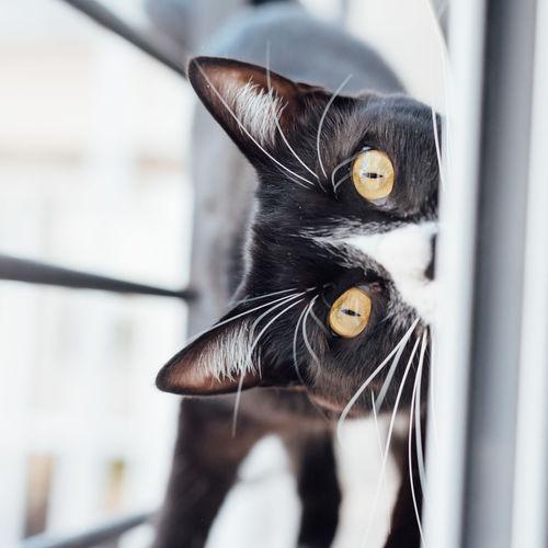 Animal Themes Cat Close-up Cuddling Day Feline Mammal No People One Animal Yellow Eyes