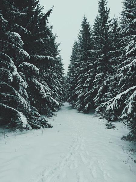 Winter Vanishing Point EyeEm Best Shots Poland Polska Iphoneonly IPhoneography IPhoneographer VSCO