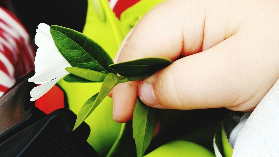 Purity in child Human Body Part Leaf Human Hand One Person Human Finger Close-up People Real People Freshness Green Color Purity Childhood Childs Hand Flower In Hand Children Purity In Soul Innocence