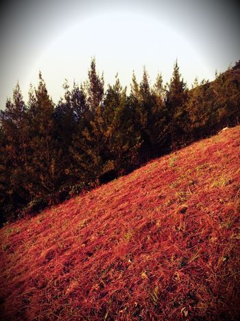 Autumn Hill Autumn Colors Red Grass