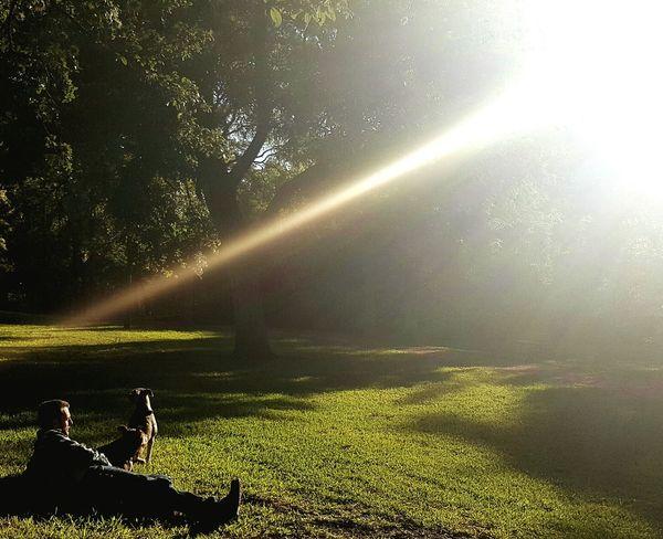 Light And Shadow Good Morning Austin Texas Daylight Sunrise Hydepark Dogs Soakingupthesun Park Bright Relaxing Peaceful Sunlight Starburst