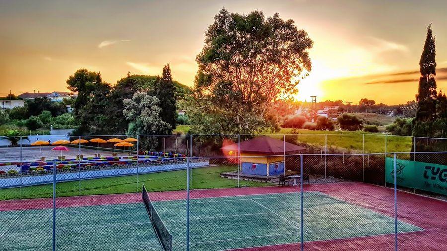 Tennis Tree