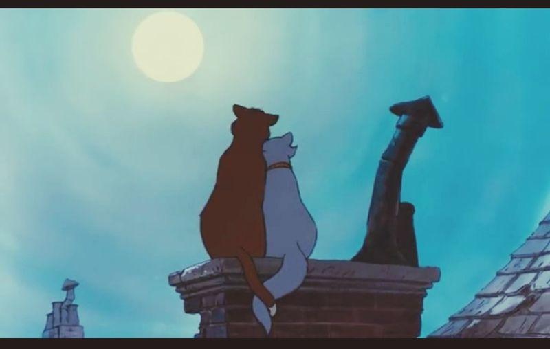 ♡♡♡The EyeEm Facebook Cover Challenge Disney Cat Aristocats