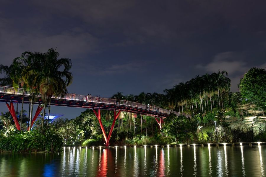 Dragon Bridge Gardens by the Bay Tree Water Illuminated Architecture Built Structure Plant Night Sky Cloud - Sky Nature Waterfront Reflection River No People Connection Bridge Bridge - Man Made Structure Building Exterior City Outdoors HUAWEI Photo Award: After Dark