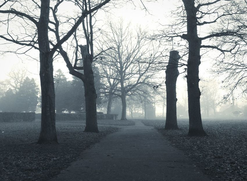 ... a Park in North Walsham, Norfolk Uk ... Tree Trees Fog Branch Landscape Foggy Parque  Mono Blackandwhite Monochrome Alley Tree Trunk Today Mood парк туман деревья Аллея Bw