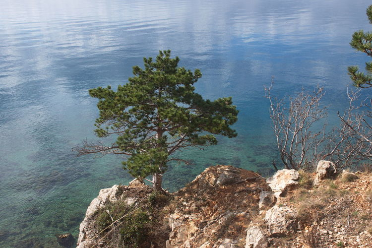 Water Plant Tranquility Nature Rock Beauty In Nature Tree Tranquil Scene Day Rock - Object Scenics - Nature No People Solid High Angle View Growth Outdoors Sea Blue Reflection Clouds Idyllic Shore Coast Environment