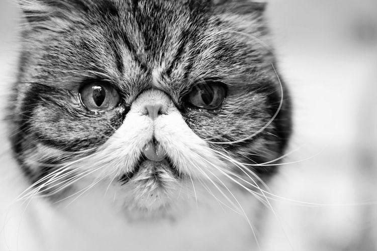 Black & White Blackandwhite Blackandwhite Photography Cat Catoftheday Cats Feline Feline Friend FelineDomesticus