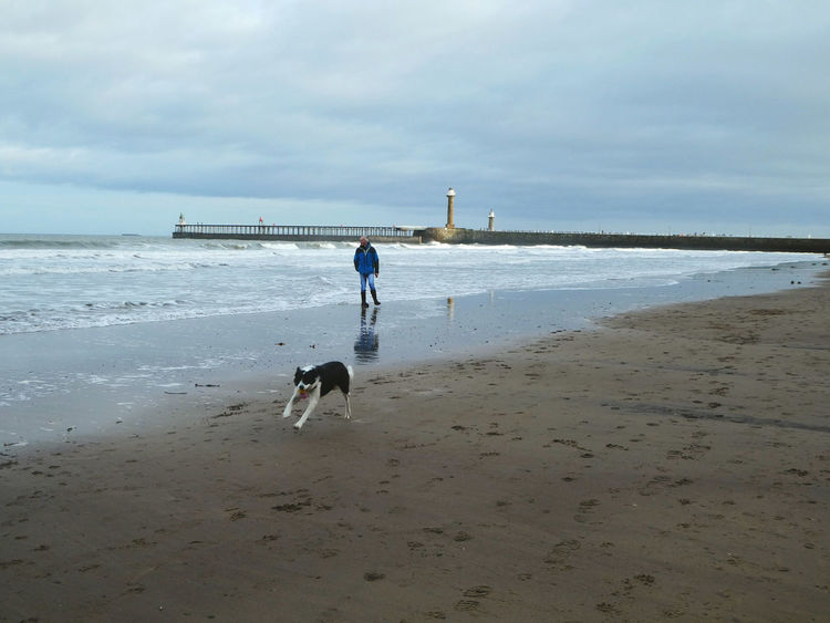 The sheer canine joy of a run on the beach..!! Dog Beach Water Pets Joy Happiness Freedom Sea Domestic Animals Animal Themes One Animal Nature Outdoors Wet Sand Beauty In Nature Horizon Over Water Lighthouse Man Dogwalking Collie Dog Happy Adult