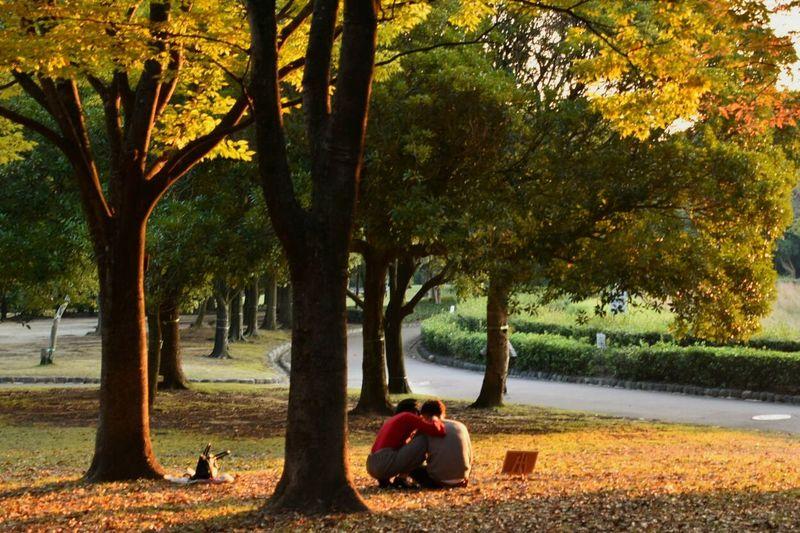 Autumnlover Sunggleup 夕日を浴びて 夕暮れ 落ち葉 Autumn Leaves Japan Bathedinthesunset 11月 November