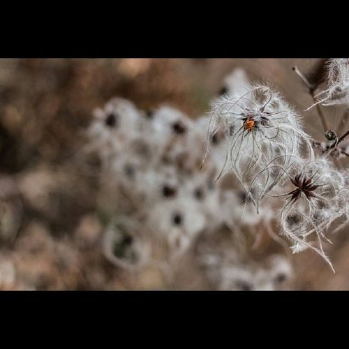 Canon 60d 28mm_f2_8 Nature araignée