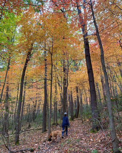 Rear view of people with dog in forest during autumn