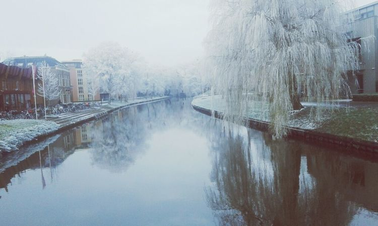 Water Tree Nature Sky Beauty In Nature Reflection Outdoors Fog Day Netherland Dutch Landscapes Weather Landscape Beauty In Nature Winter Snow Cold Temperature Sneek City