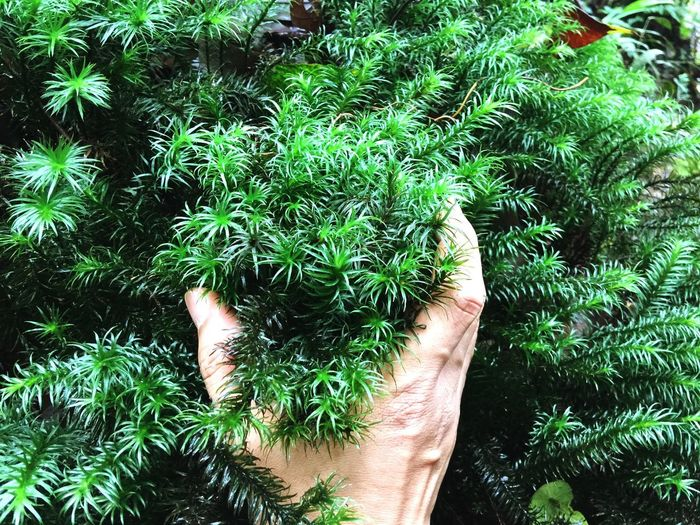 Mossy Mossy Leave Green Color Plant Human Body Part One Person Real People Growth Human Hand Day Hand Nature Personal Perspective Body Part High Angle View Lifestyles Outdoors Unrecognizable Person Tree Freshness Leisure Activity Finger