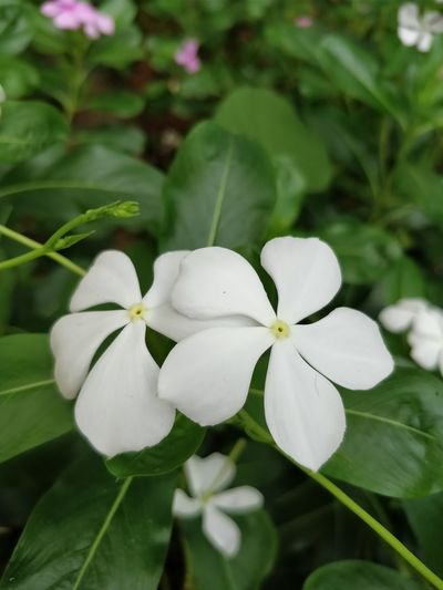 ♥️ Flower Plant