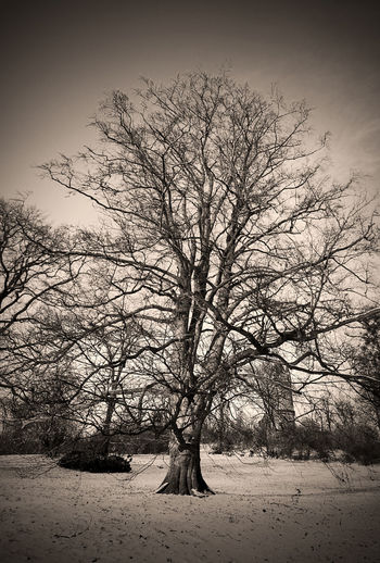 #Old Tree Black And White Potsdam Park Babelsberg Winter Snow Vertical Panorama Vignette
