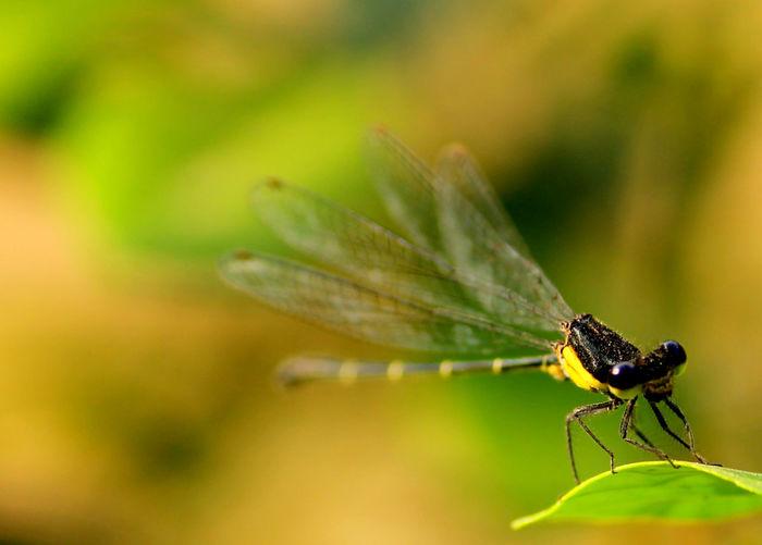 Macro shot of damselfly perching on leaf