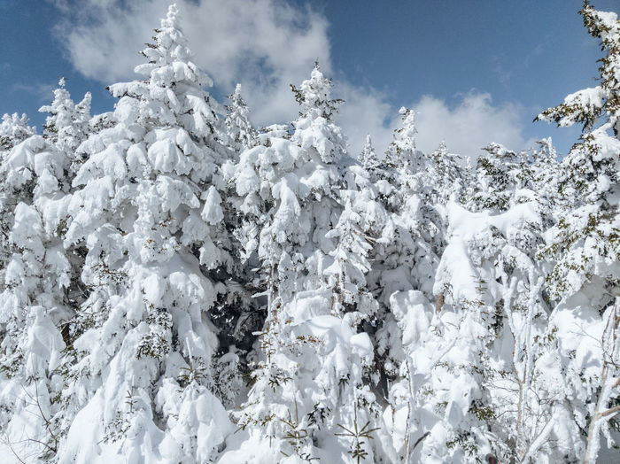 Low angle view of snow covered plants against sky