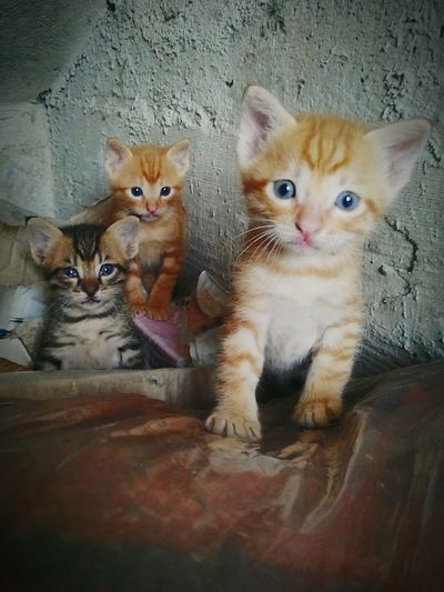 Babys Cats Animals
