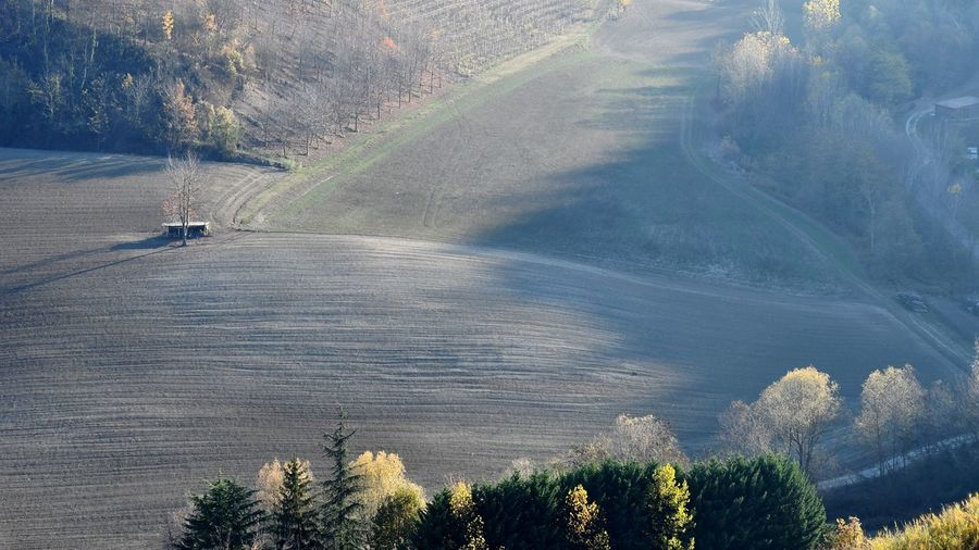 Fieldscape Fields In Autumn Autumn Langhe Countryside Tranquility Rural Nature Outdoors Day Scenics Landscape Tree Beauty In Nature Growth Rural Scene No People