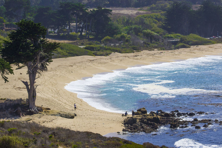Sunny afternoon at the beach Carmel California Monastery Beach Pacific Coastline Beach Beauty In Nature Blue Water Cypress Trees  Horizon Over Water Nature Ocean Outdoors Pacific Ocean Rocks Sand Sand Dune Sea Weed  Shore Sunny Day Tranquil Scene Waves White Waves