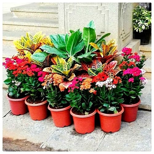 Potted Plant Nature Beauty In Nature Colour Of Life Splash Of Colour Colorful Flowers EyeEmNewHere EyeEm Nature Lover FeelingFresh  Freshness Outdoors Freshness Multi Colored Eyem Nature Exploring