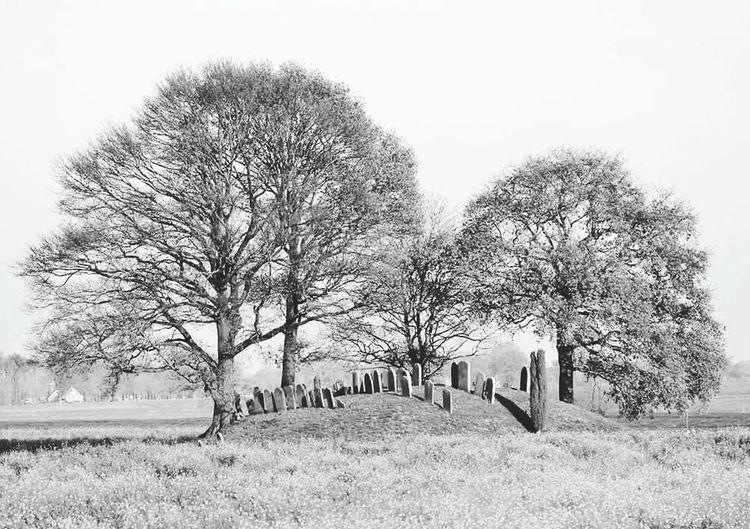 Jewish Cemetary Landscape Nature Hardenberg, Netherlands Monochrome