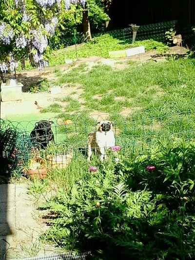 Hundezucht Dresden 01159 im SilliconenSaxony Frankenbergstrasse