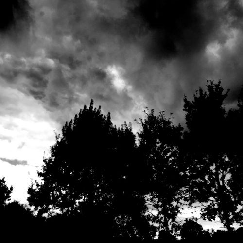 Clouds Trees