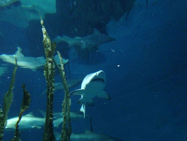 Shark in water Aquarium Beauty In Nature Blue Day Nature No People Outdoors Scenics Shark Swimming Tranquility Water Wildlife